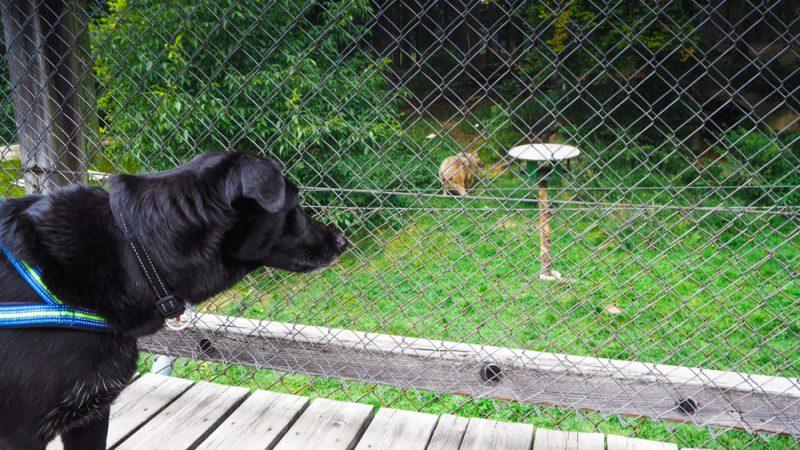 Hund beobachtet Bär