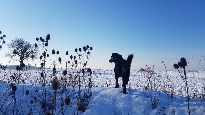 hund im schnee weihnachtsferien