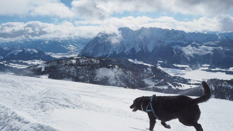 tauplitz winterwanderung ausblick grimming