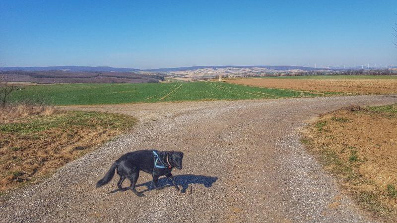 Hunde beschäftigen spazieren beim corona virus