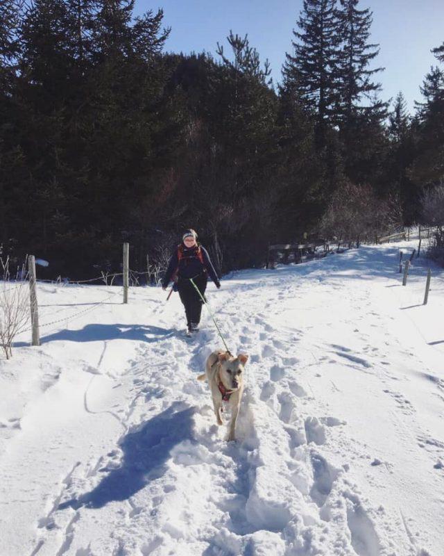 hund im schnee mamauwiese