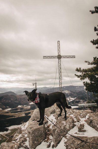 Gipfelkreuz Hohe Wand mit Hund