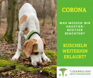 Hunde Coronavirus