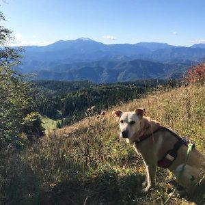 Hund Wandern