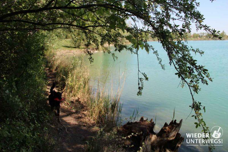 Badeteich HIrschstetten im Schatten Hund
