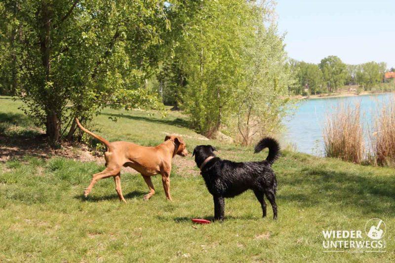 Hunde am Badeteich Hirschstetten
