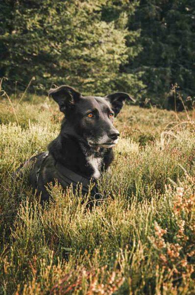 """Wanderung in St. Corona: Mit Hund und Ameise """"Corona"""" zum Kampstein"""