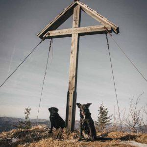 Zwei Hunde am Gipfelkreuz Obersberg