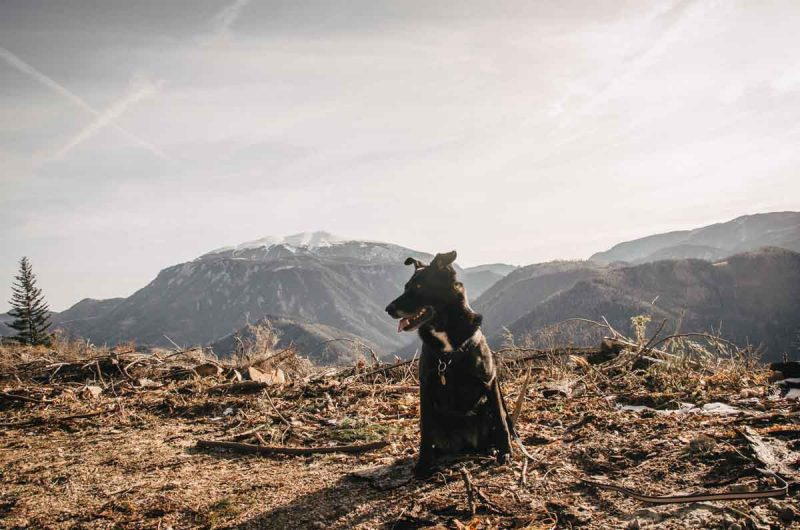 Hund Wanderung Obersberg