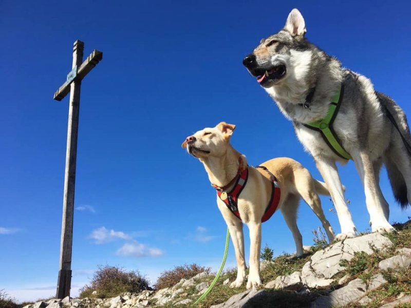 Hunde am Gipfel Unterberg
