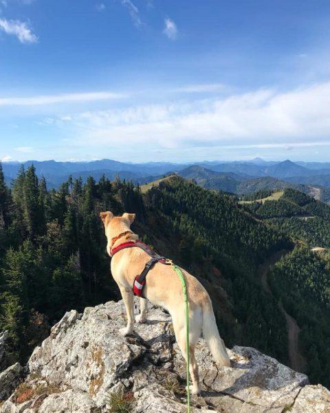 Hund Gipfelkreuz Unterberg
