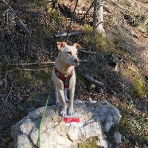 Hund Wandermarkierung Unterberg