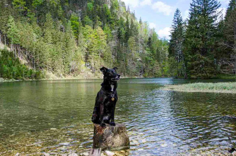 Hund am Mitterersee