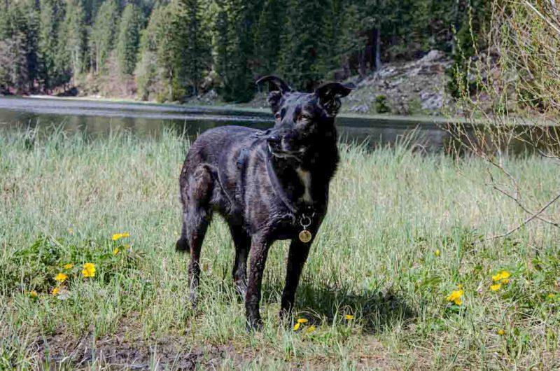 Lunzer See Hund Wanderung