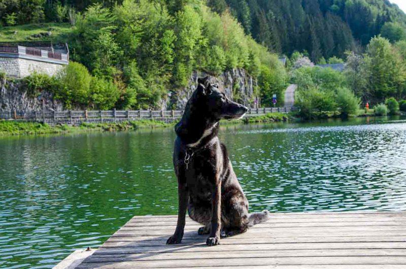 Lunzer See Hund
