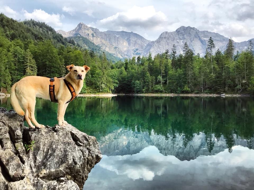 Ödsee Hund