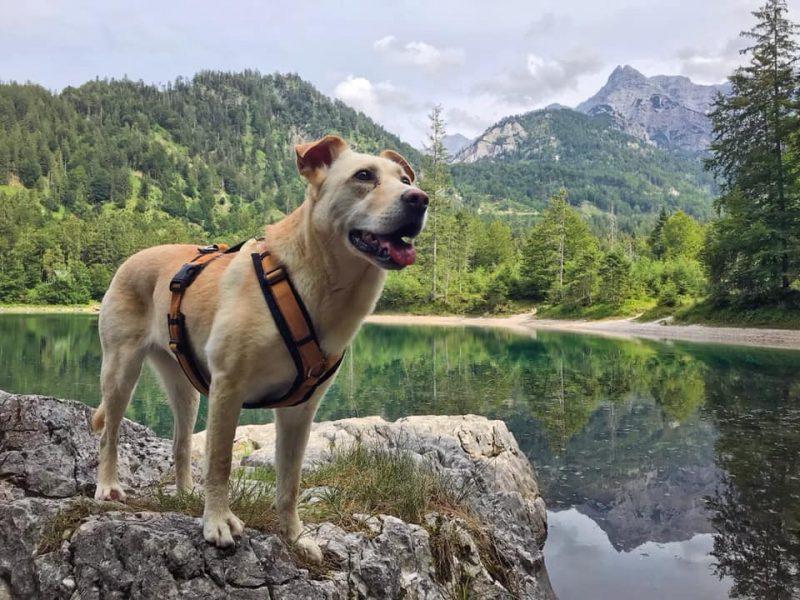 Mit Hund am Ödsee