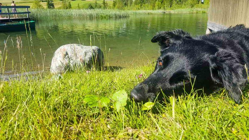 Hundezugang Weissensee Camping Kärnten