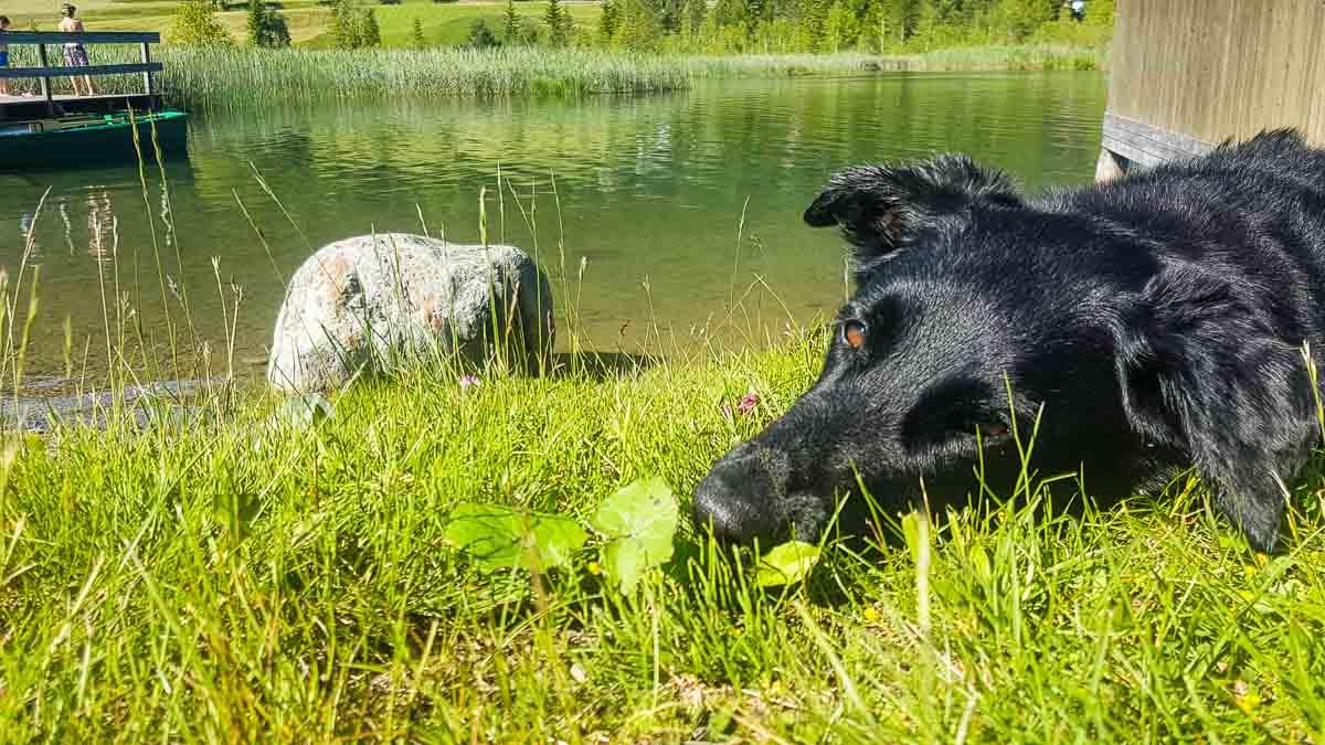 camping weissensee mit hund müller kärngen