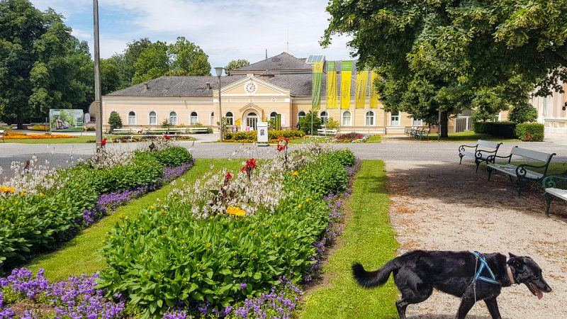 kurpark bad hall mit Hund
