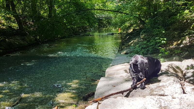 Sulzbach Kur mit hund badhall