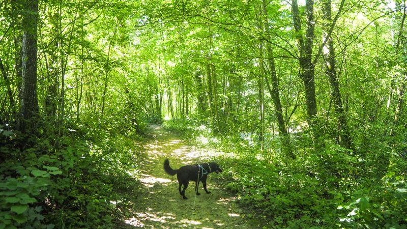 kur mit hund: Kurpark