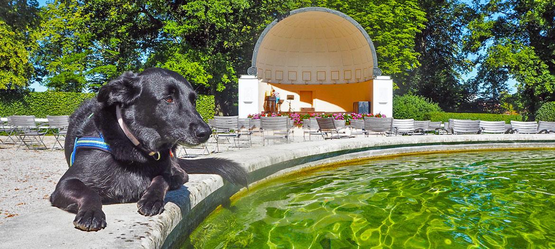 Auf Kur mit Hund in bad Hall musikpavillon