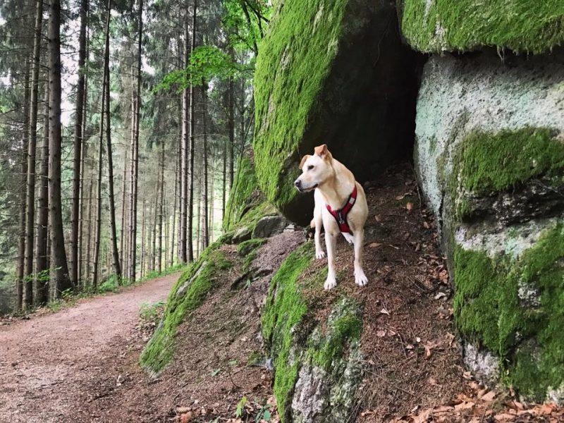Hund stein klamm