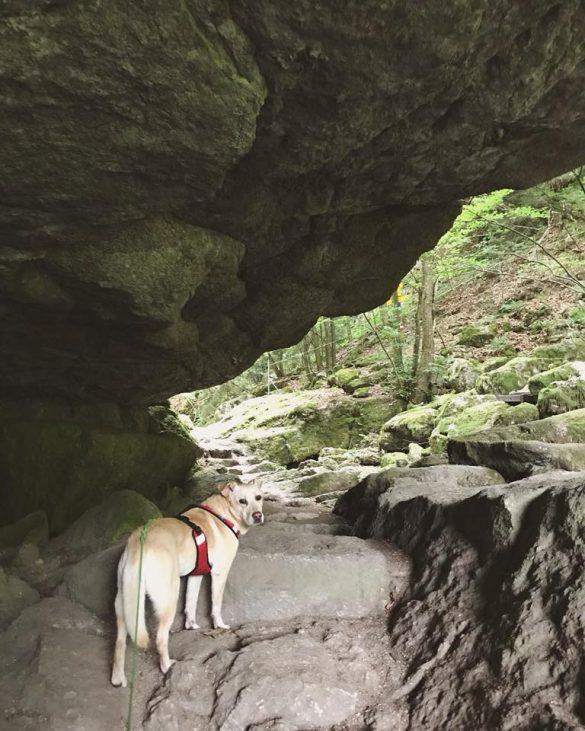 Stiller stein klamm hund