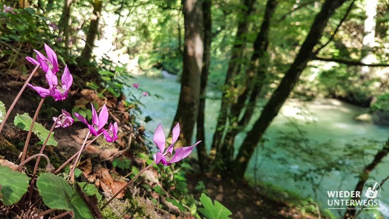 Erlaufschlucht Sommer Blumen