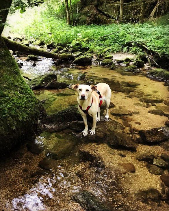Gießenbach Hund