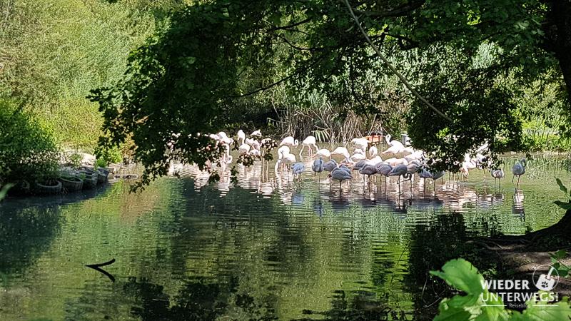 flamingos salzburg