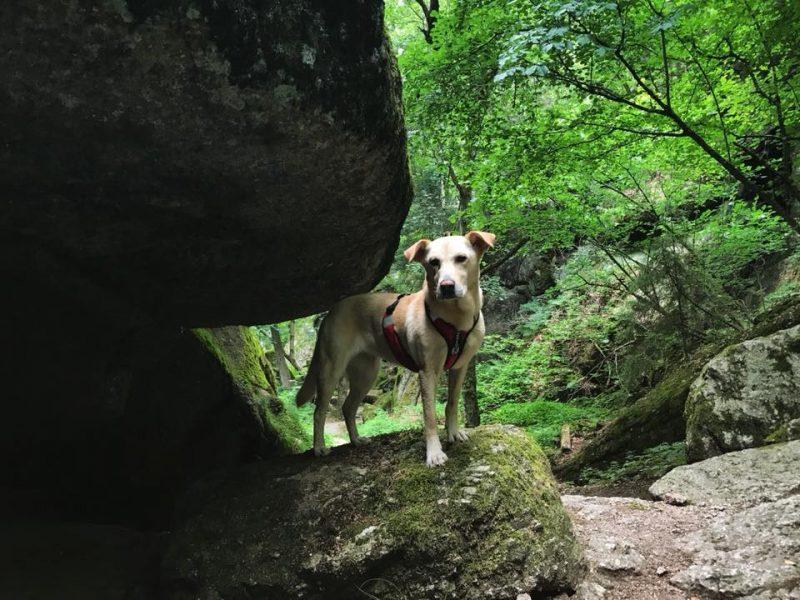 Stillensteinklamm dunkel hund