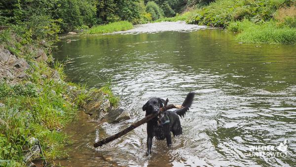 Hund Große Raabklamm