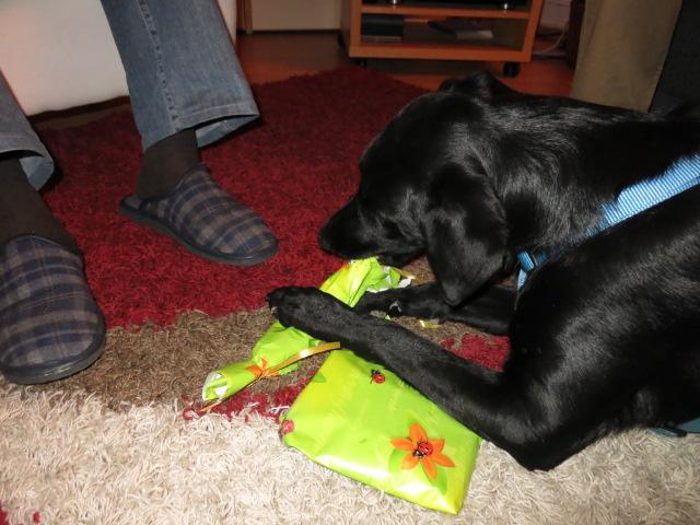 Hund Weihnachtsgeschenke auspacken