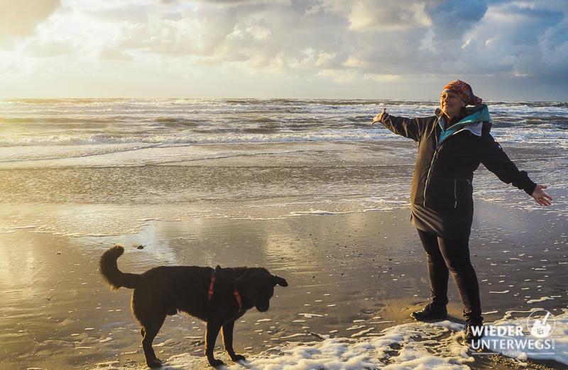 Abendlicher Strand in Holland mit Hund Sonnenuntergang
