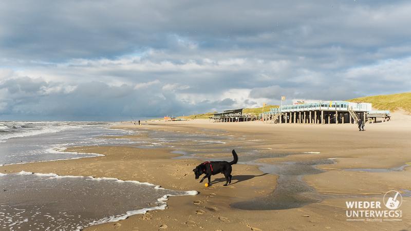 Callantsoog Hund Strand