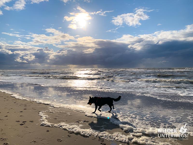 Callantsoog Küste Holland mit Hund