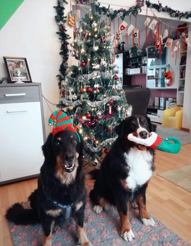 Geschenke für Hundefreunde: Hunde zu Weihnachten