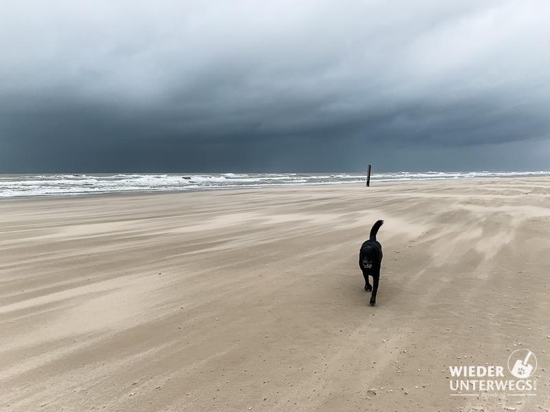 Am Strand von Camperduin mit Hund in holland