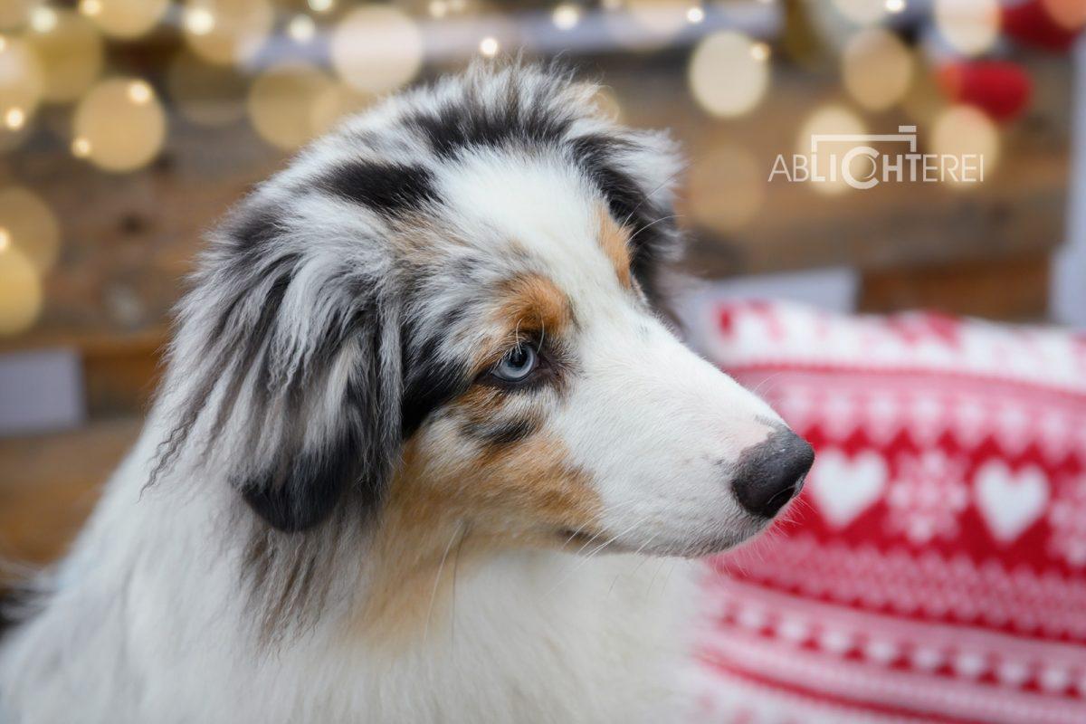Hunde geschenke für Weihnachten finden