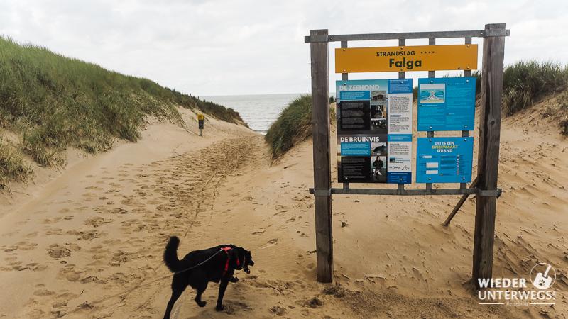 Strandzugang über die Dünen in Holland