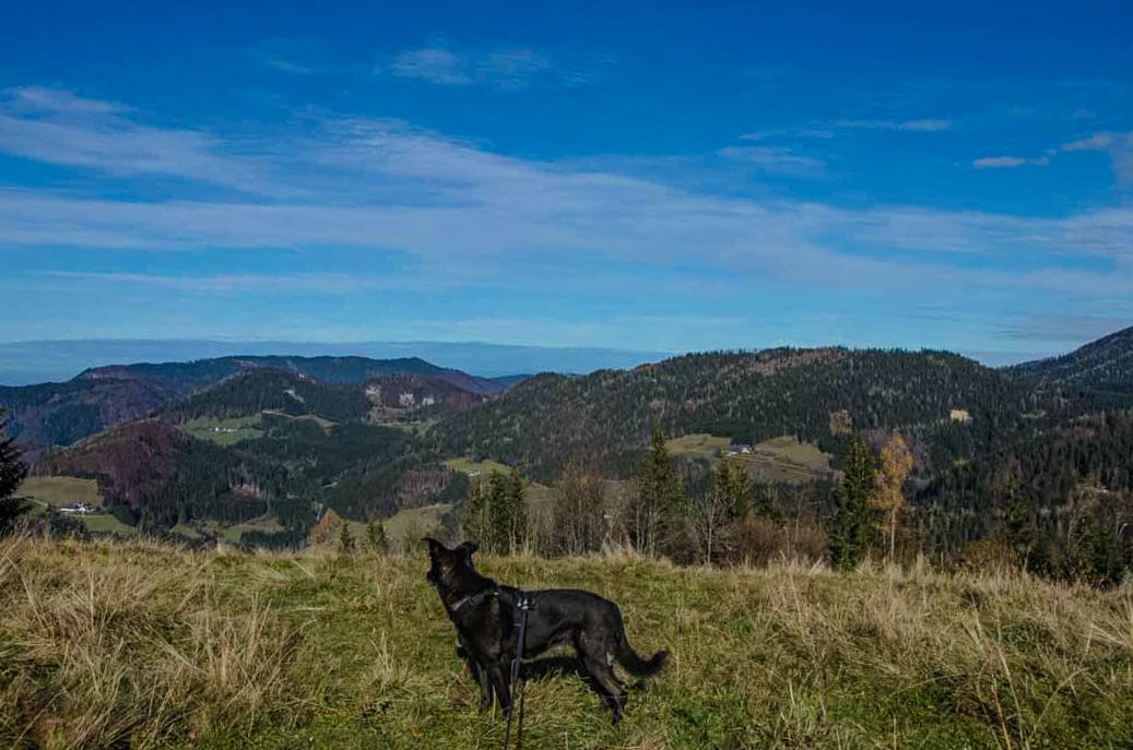 Maiszinken Wandern mit Hund