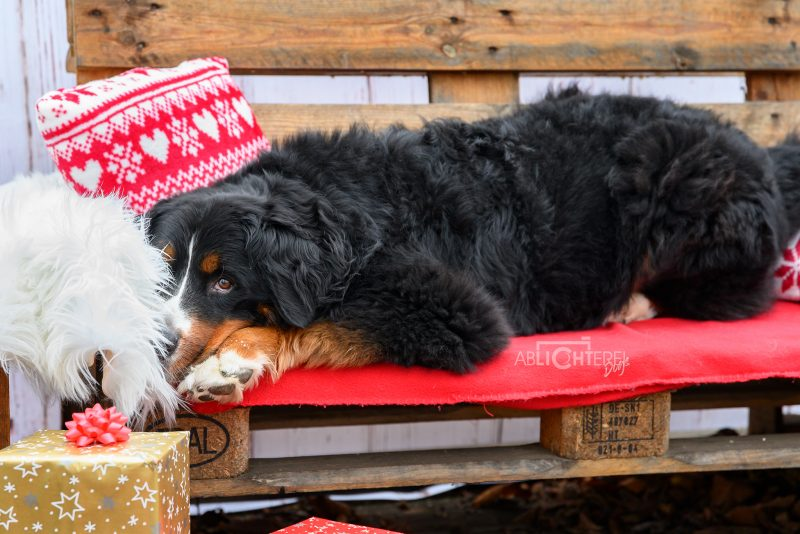 Hunde Geschenke Weihnachten