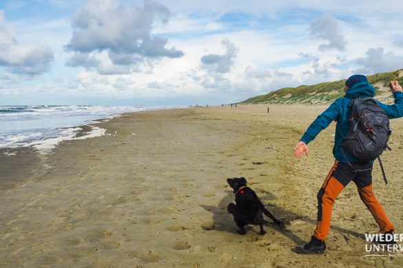 texel paal 12 mit hund