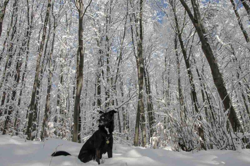 Winter im Wald in der Sophienalpe Schnee