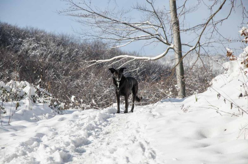 Mit Hund wandern auf der Sophienalpe im Schnee