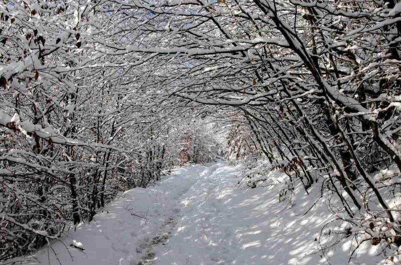 winterwonderland auf der sophienalpe in wien am stadtwanderweg