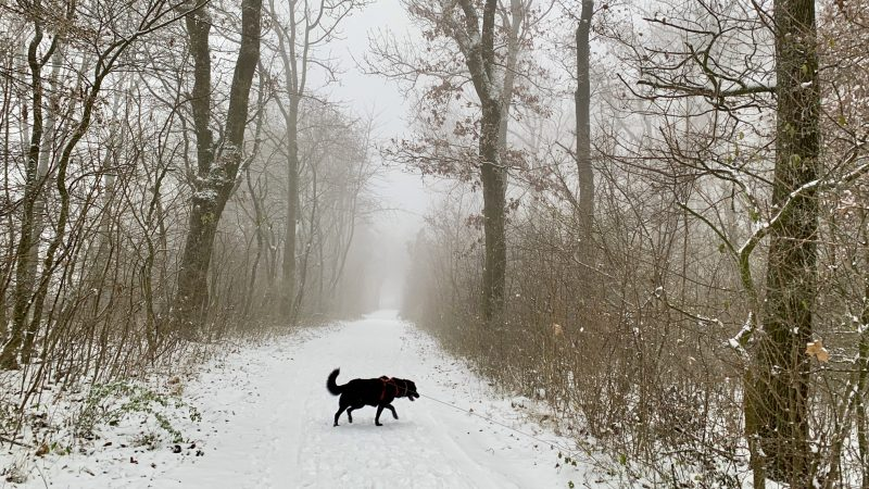wandern stadtwanderweg winterwanderweg niederösterreich bisamberg