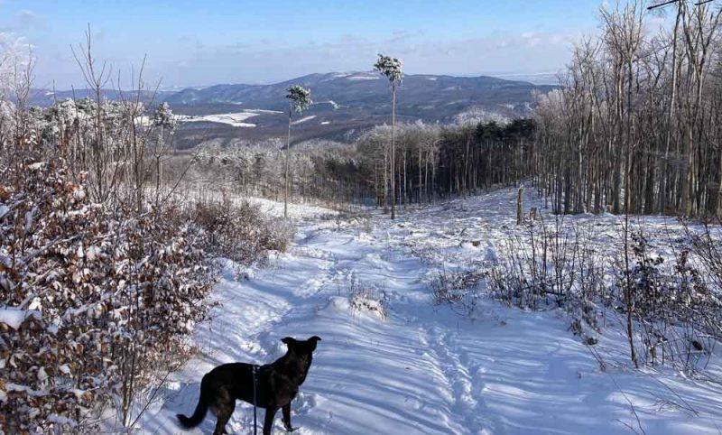 Wanderung mit Hund Lindkogel Baden